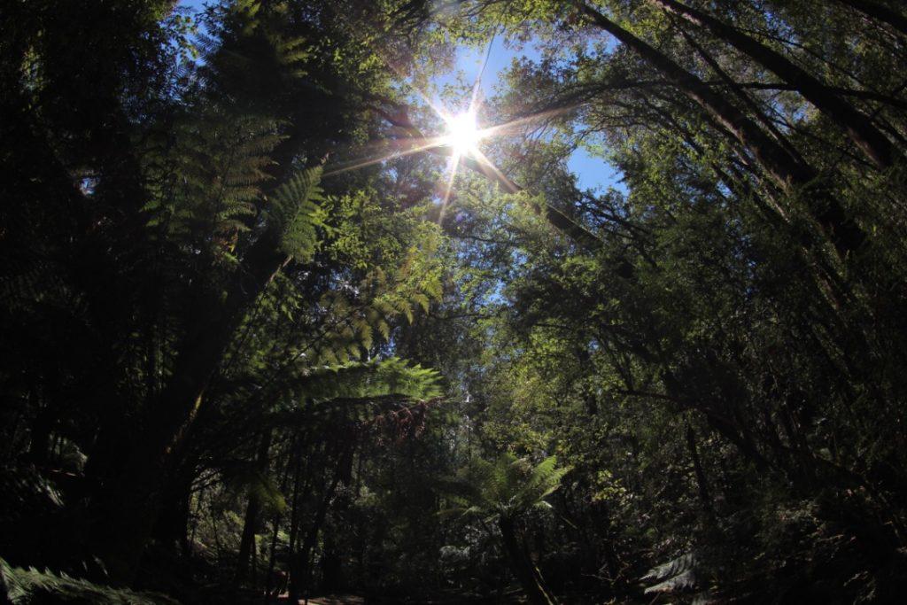 マウントフィールド国立公園
