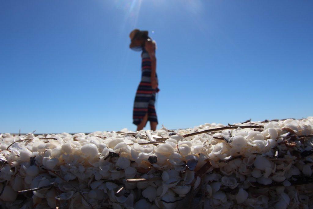 貝でできたビーチ