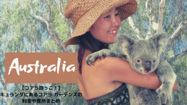 【コアラと抱っこ撮影】キュランダのコアラ・ガーデンズ【ケアンズ観光】