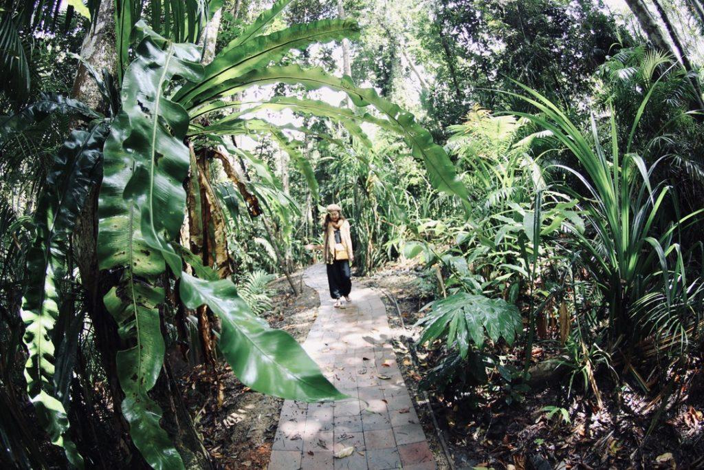 キュランダの熱帯雨林