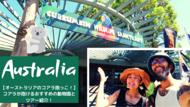 悩殺!オーストラリアでコアラを抱っこできる動物園 11選!