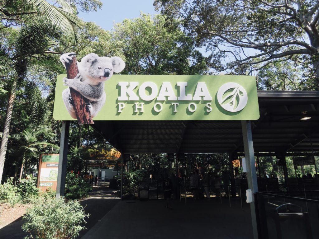 コアラの抱っこ撮影