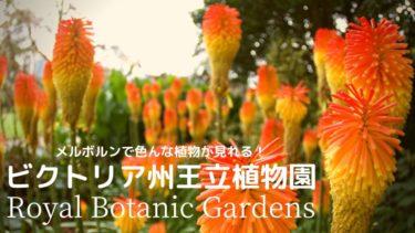 【お散歩コース】メルボルンの大きな植物園Royal Botanic Gardens Victoria