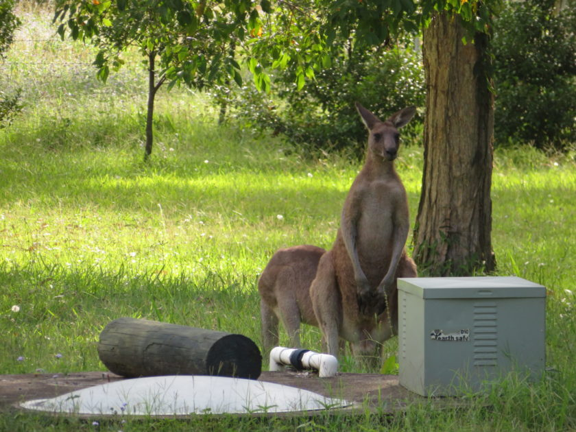 オーストラリアの無料キャンプ場